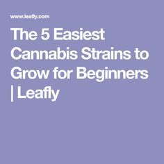 The 5 Easiest Cannabis Strains to Grow for Beginners | Leafly