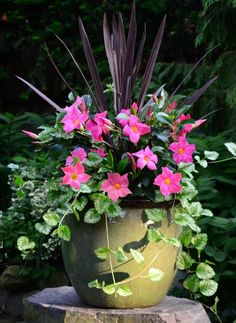 Container Gardening For Patio except Container Gardening Soil Mix if Container V. : Container Gardening For Patio except Container Gardening Soil Mix if Container V. Container Flowers, Flower Planters, Flower Pots, Flower Ideas, Full Sun Container Plants, Urn Planters, Outdoor Flowers, Outdoor Plants, Garden Soil