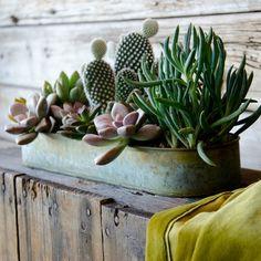 Decorar con cactus y suculentas Más