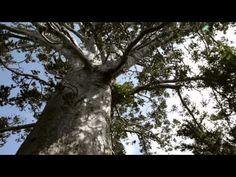 Tutukaka - Whangarei: Love It Here!