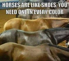 I wish I could have one in every color :/ I only have one horse but he's the best in the world!