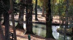 Nice Creek In The Forest - Campello Sul Clitunno, Umbria, Italy - Stock Footage   by eZeePicsStudio