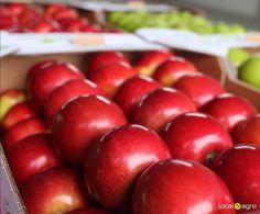 Local Agro Classifieds Продам яблоки - FRUITS - Khmelnytskyi Oblast - FREE INTERNATIONAL CLASSIFIEDS