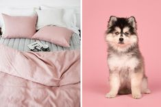 Plan A Cozy Morning In Seven Steps And We'll Give You A Fluffy Dog Breed To Adopt