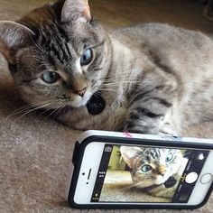 Let me take a selfie | Animals Zone; another picture of the amazing Nala!