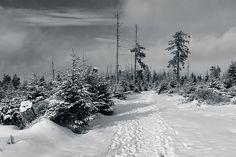 Kaiserweg, Harz by Andreas Levi