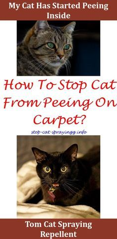 Cat House For Those Chilly Nights With Images Cat Spray Cat Pee Smell Cats Smelling