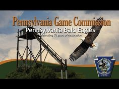 Pennsylvania Game Commission - State Wildlife Management Agency - Bald Eagle Live Streamhttp://www.portal.state.pa.us/portal/server.pt?open=514&objID=1592549&mode=2
