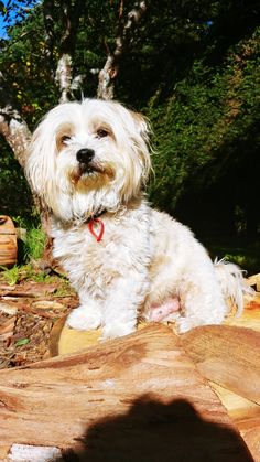 Olly posing My People, Dogs, Animals, Animaux, Doggies, Animal, Animales, Pet Dogs, Dog