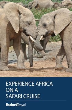 On a safari cruise, guests get the chance to explore the African wilds, setting out in search of the continent's exotic landscapes and legendary wildlife. Tanzania, Kenya, The Places Youll Go, Places To Go, Western Sahara, St Helena, Future Travel, Africa Travel, Continents