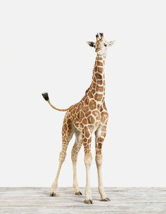 Favorite animal print
