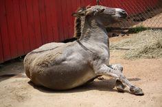 Donkey I by Kehywakkyn-Stock