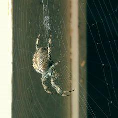 Big #spider's small #web