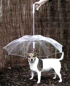 "The pet umbrella keeps your dog ""dry and comfortable."" 