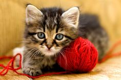 A cat with a ball of yarn - they go together like sunshine & lollipops
