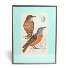 Vogels in een lijstje. Die kleuren!! VERKOCHT #vogel #bird #prent #ei #kleur