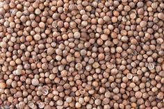 Coriander Seeds  Coriandrum sativum  texture background  Also called Cilantro or Dhania or Malli  Used in cooking and to give a pleasant scent in perfumery, cosmetics, soap-making