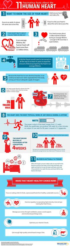 The 11 interesting human heart facts in this infographic will help you to better appreciate this vital organ. http://www.mercola.com/infographics/human-heart-facts.htm