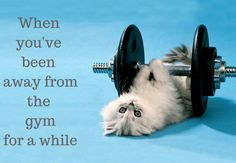 when you've been away from the gym for a while. - funny, cute, cat,