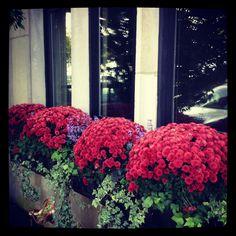 Fall Annuals   Window Box   Urban   Garden   Landscape   Design   Mums