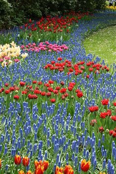 Keukenhof Gardens, The Netherlands.  Photo: Taniuszka via Flickr.