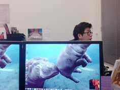Bored Office Workers Create Hilarious Animal Hybrids to Pass the Time