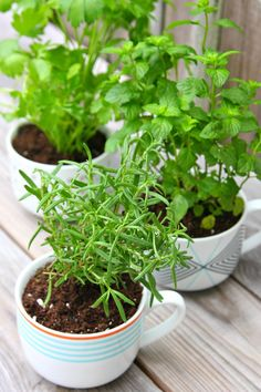 Coffee Mug Herb Planters {Gift Idea} - Happy-Go-Lucky