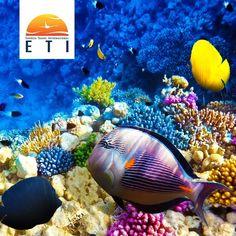 Poznaj z Eti podwodny świat.  Sprawdź nasze oferty już teraz!  #ETI #EtiPodróże #Egypt #Egipt #sun #podróże #podwodnyświat#słońce #wypoczynek #travelphotography #travelpic #vacation #holiday #goodtime #relax #travel #travelling #palm #nurkowanie #wspomnienia #memories