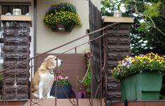 Blühende Häuser, Terrassen und Gärten