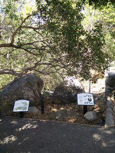 Family Fun Adventure: Santa Barbara Natural History Museum