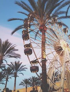 Ferris wheel and Palm trees Summer Breeze, Summer Vibes, Summer Of Love, Summer Fun, Summer Days, Beautiful World, Beautiful Places, Wanderlust, Summertime Sadness