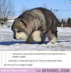 Puggle Wuggle…