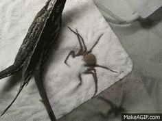 It's less cute and more scary without the commentary. | Sand Spider Fails To Hide In Sand