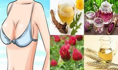 Seven Effective Home Remedies For Breast Enlargement