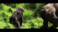 Damian Aspinall - Djala Homecoming video (Part 1) THIS IS WHAT IT'S ALL ABOUT, HELPING AND RELEASING THESE BEAUTIFUL ANIMALS BACK TO THE INTO THE WILD.