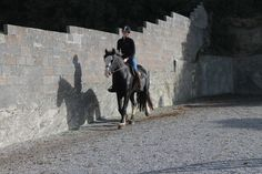 Riding with a novice rider. #loveirishhorses #horseforsale  Call James +353833168366