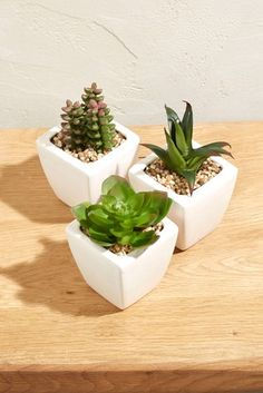 Buy 3 Pack Mini Succulents from the Next UK online shop Artificial Succulents, Artificial Flowers, Hanging Plants, Indoor Plants, Fake Plants, Wood And Metal Shelves, White Pot, Beautiful Candles, Bedroom Decor