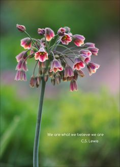 We are What We Believe We Are by Ronda Kimbrow on 500px