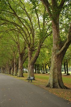 Wandsworth Park, putney