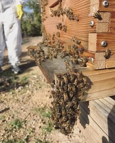 5 THINGS NEW BEEKEEPERS SHOULD NOT WORRY ABOUT Keeping Backyard Bees
