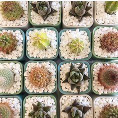 Mini succulents and cacti in modern ceramic cubes.