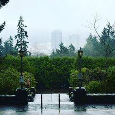 A few #garden #photos in the #Portland #rain. #pnwphotographer #oregon #rose #roses #photography #pnw #pnwonderland