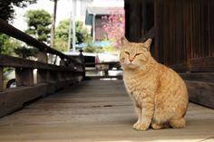 日本で初めての猫