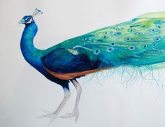 peacock watercolor by bladerunner2012 on flickr