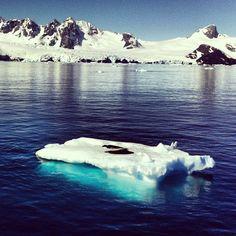 Seals on Ice! Antarctica!