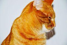 Punainen Kissa, Kissa, Pentu
