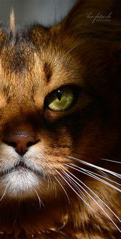 "dontcallmebetty: "" (via …die… - Immagine & Foto di kio-fotos di Katzen - Fotografia (31180574) | fotocommunity) """