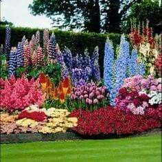 A garden Ive dreamed of with lupine, delphinium and hollyhock