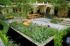 The Boat Race Garden - Whole garden