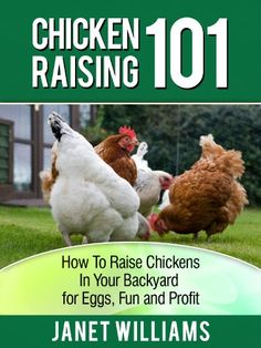 How To Raise Chickens In Your BackyardI Believe People and Chickens Can Make The World a Better PlaceYou could be just a few months away from you ...